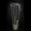 Aloe Vera 10.5 cm