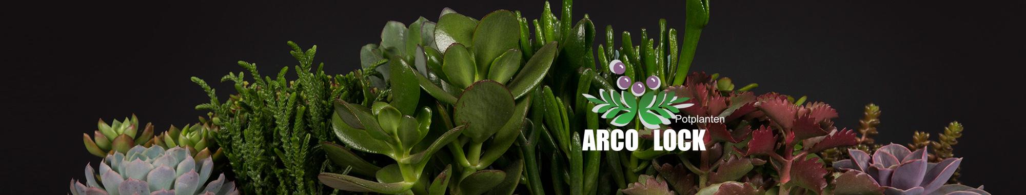 Arco Lock Potplanten